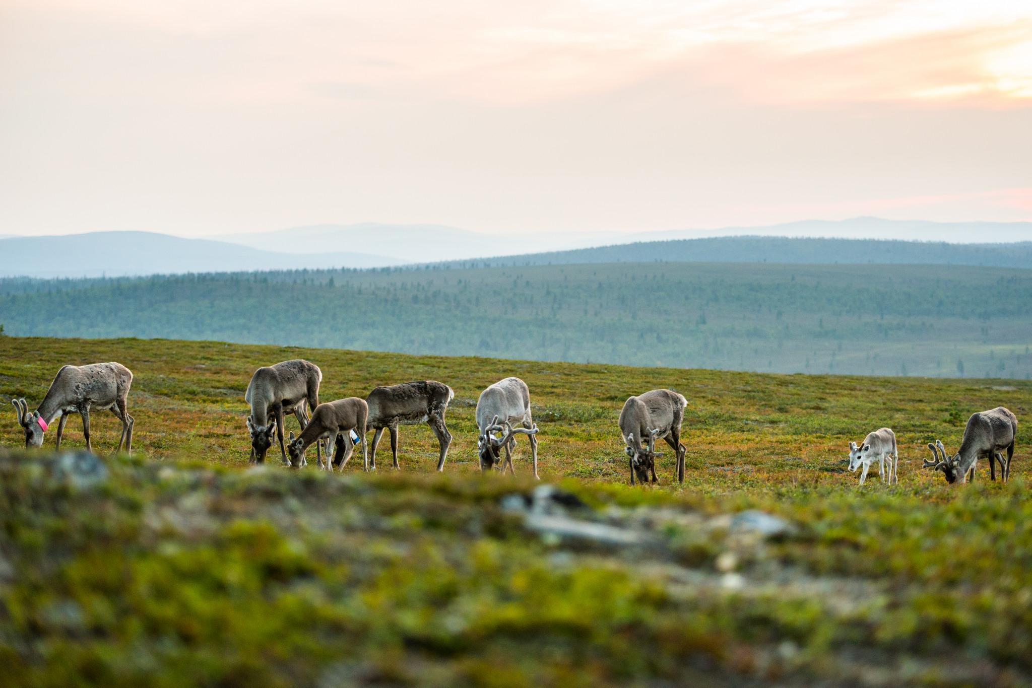 Kakslauttanen Laponie en Ete