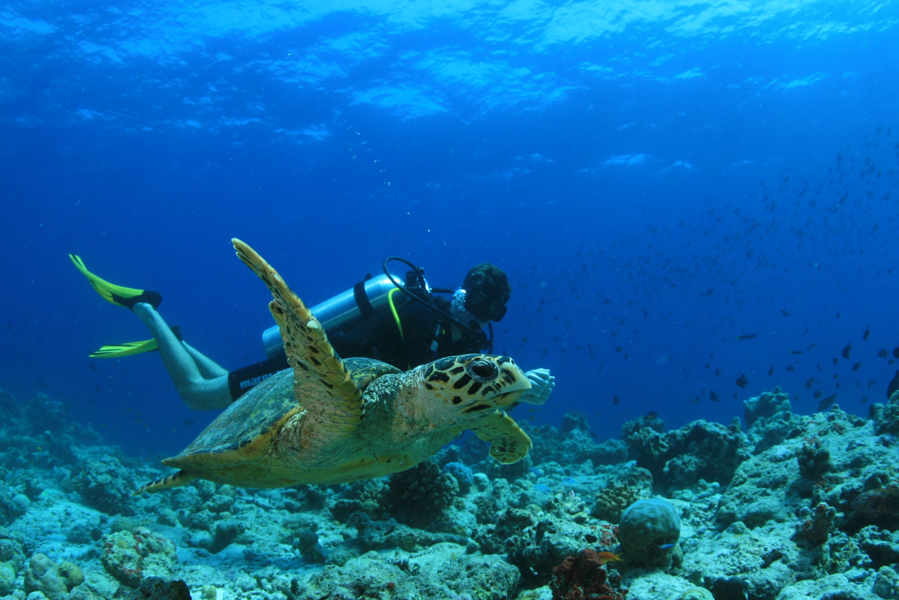 Amilla Maldives Resort Plongee.JPG