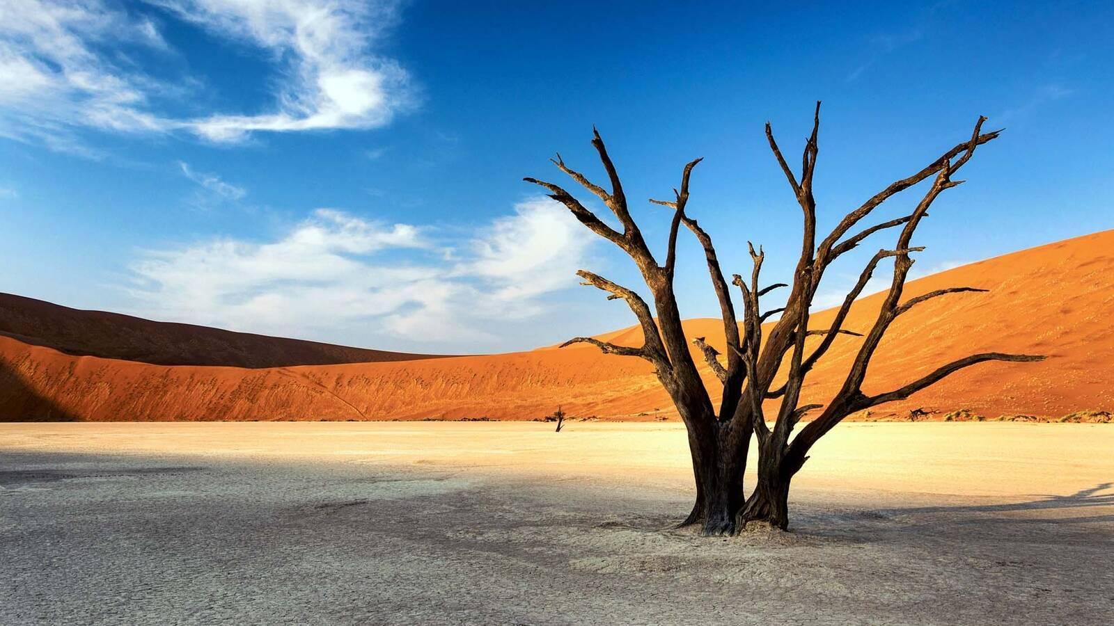 Namib Desert tiagofernandez
