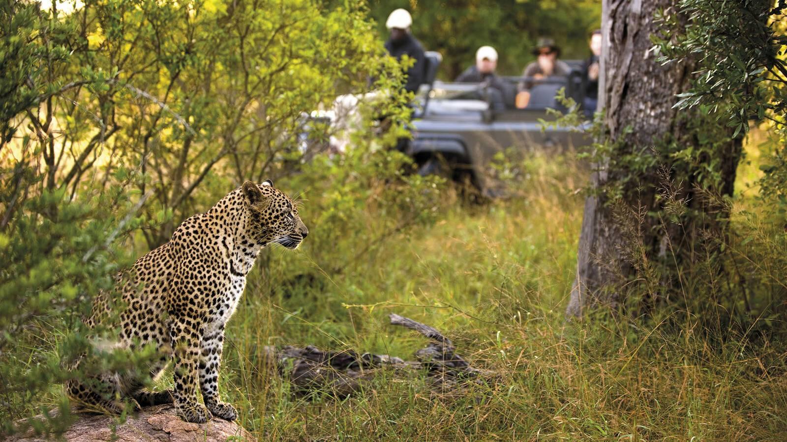 Afrique Sud Lion Sands Safari