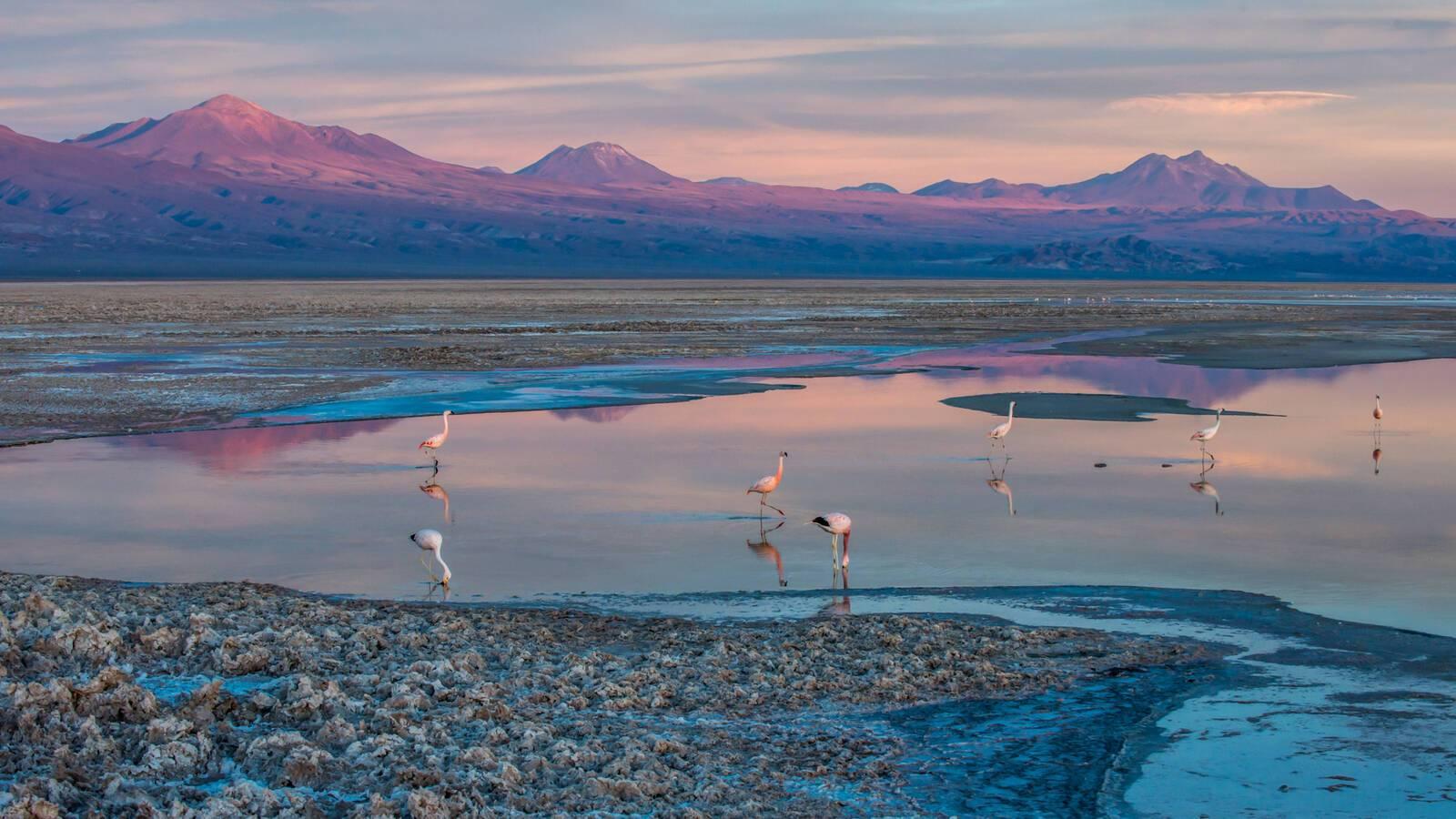 Circuit Chili Atacama Alto Salar Atacama