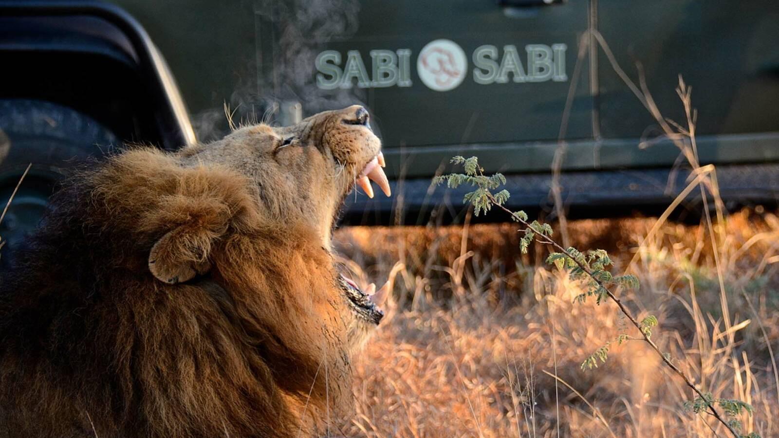 Sabi Sabi Bush Lodge Afrique du Sud Safari