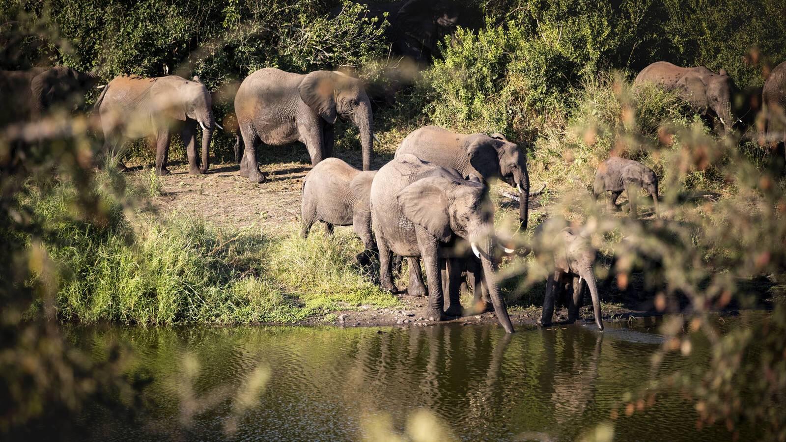 Singita Lebombo Parc Kruger Afrique Sud Elephants