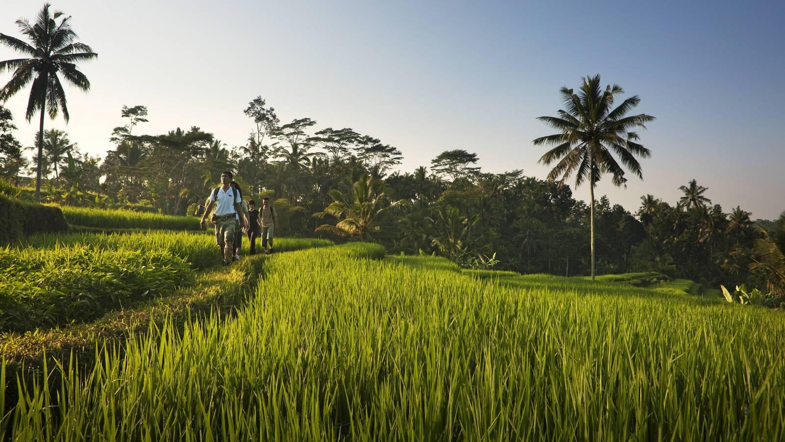 Como Shambhala Bali Rizieres