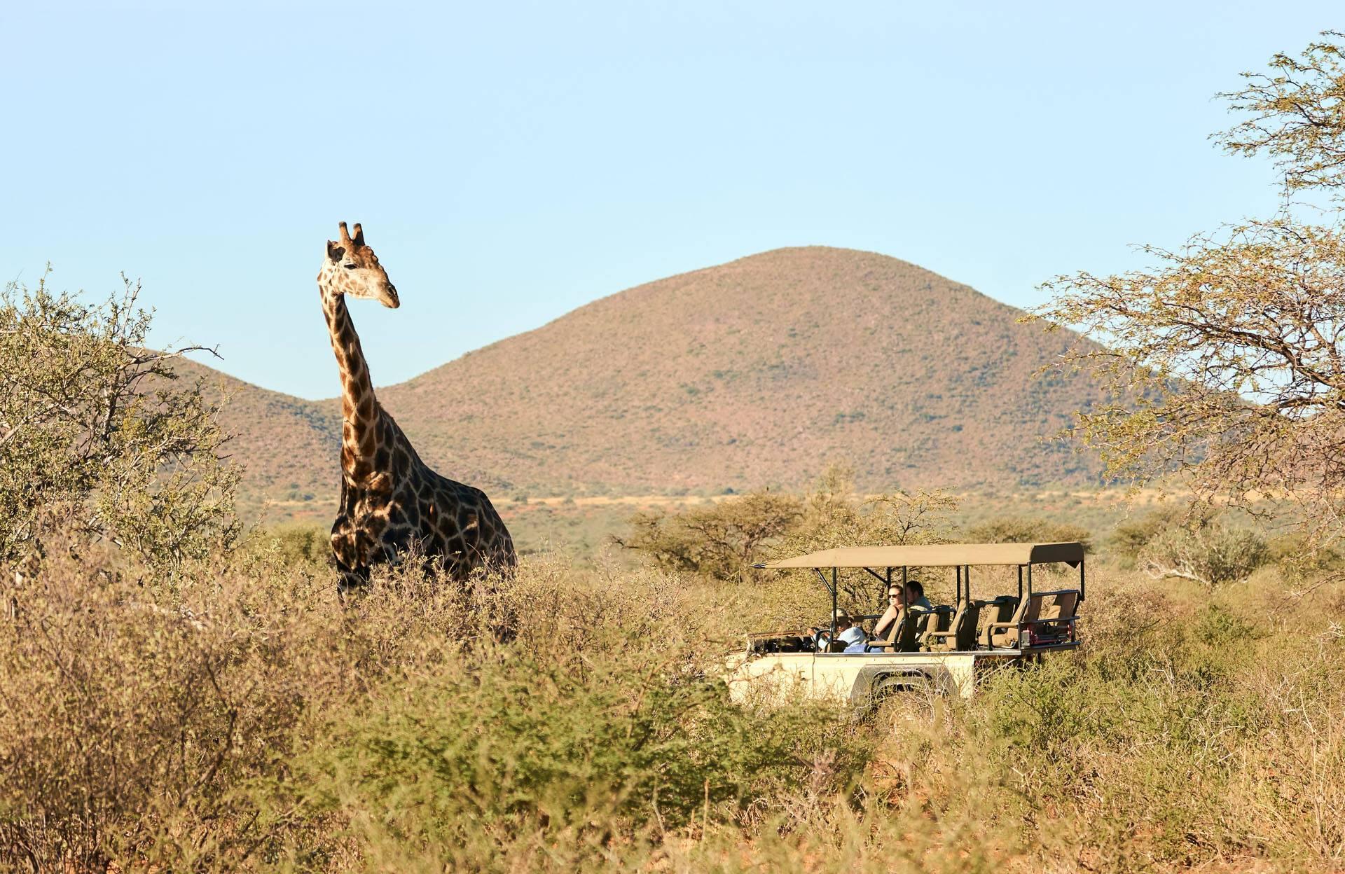 Tswalu Reserve Motse Afrique Sud Safari