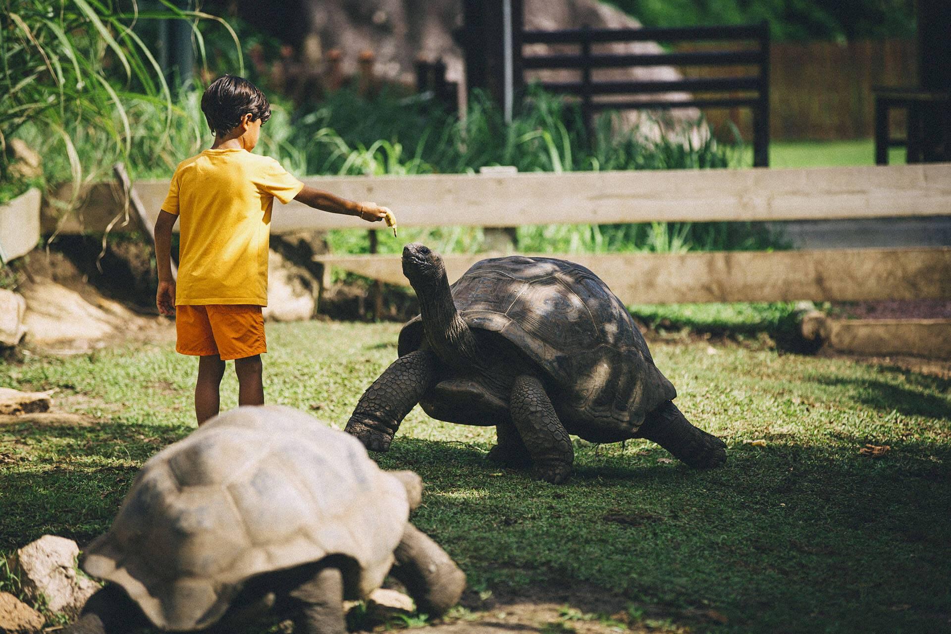 Raffles Praslin Seychelles Tortue