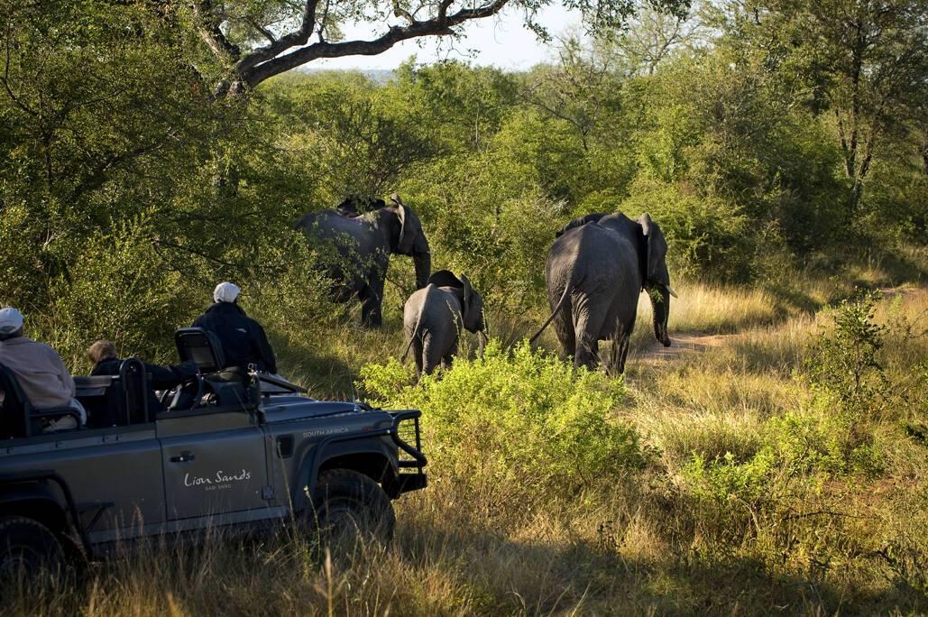 SabiSands Safari Elephants AfriqueSud