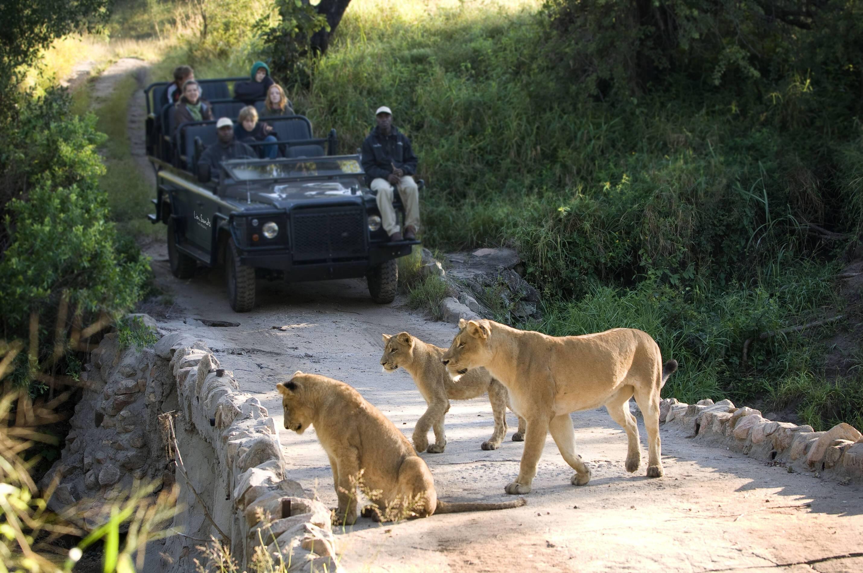 SabiSands Safari Lions AfriqueSud