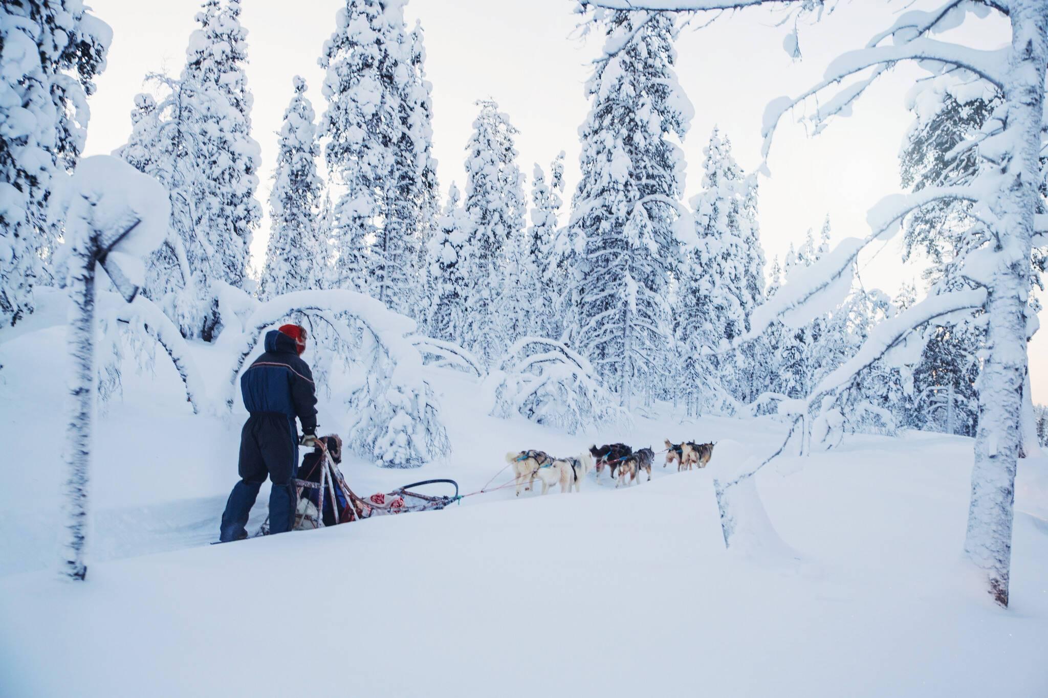 Kakslauttanen husky safari Laponie