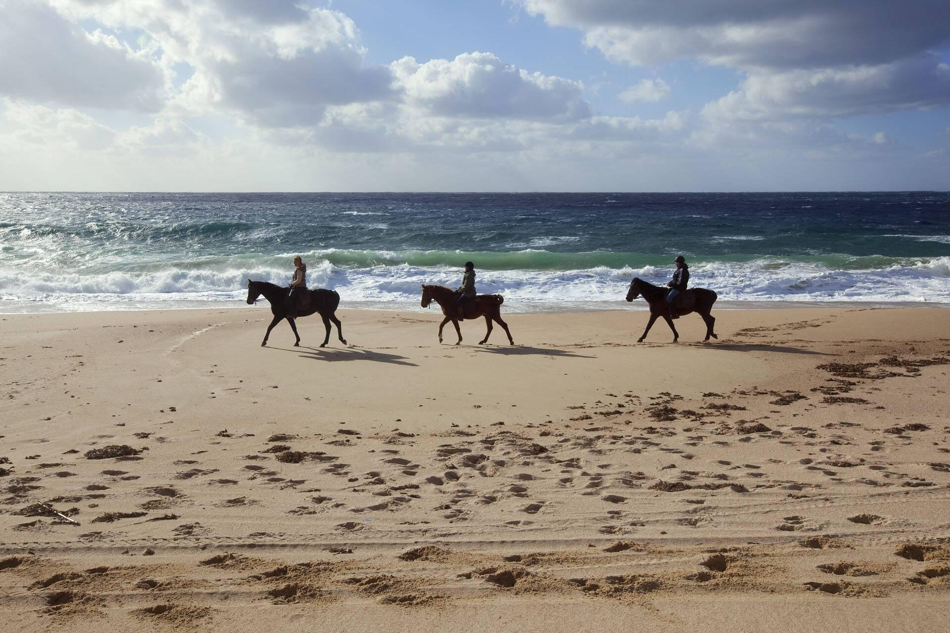 Domaine Murtoli Corse cheval Camille Moirenc