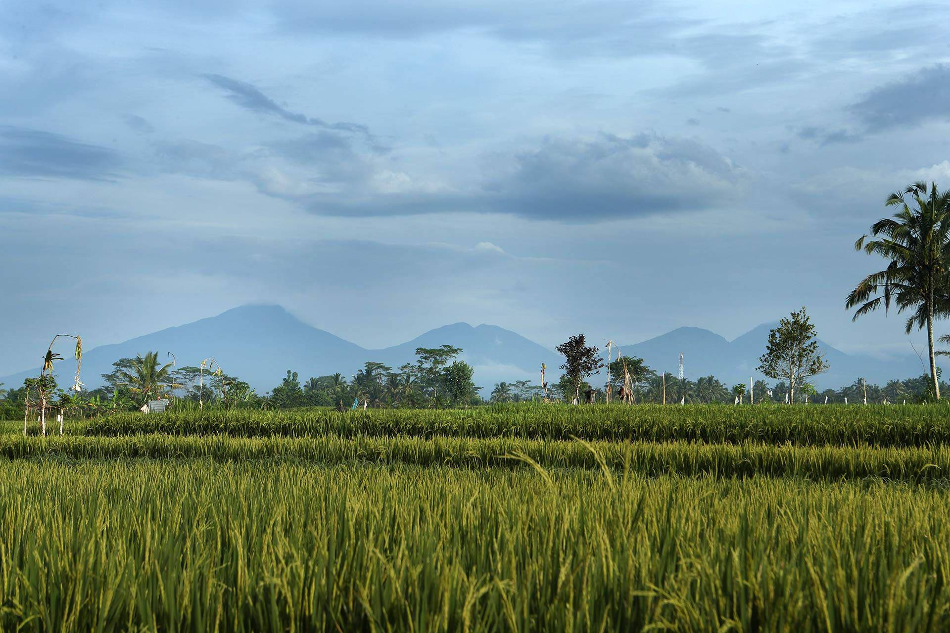 Alila Ubud Bali Rizieres