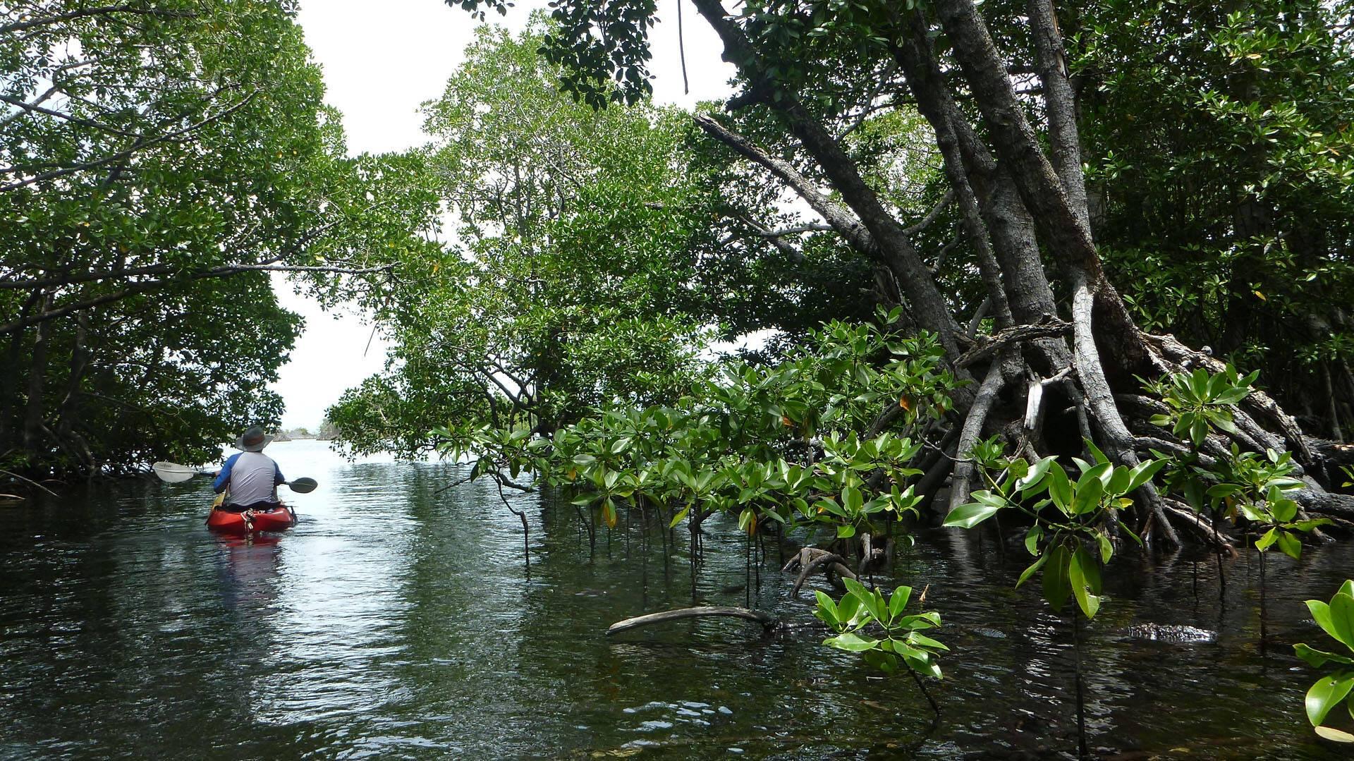 Tiger Blue Komodo Indonesie Kayak