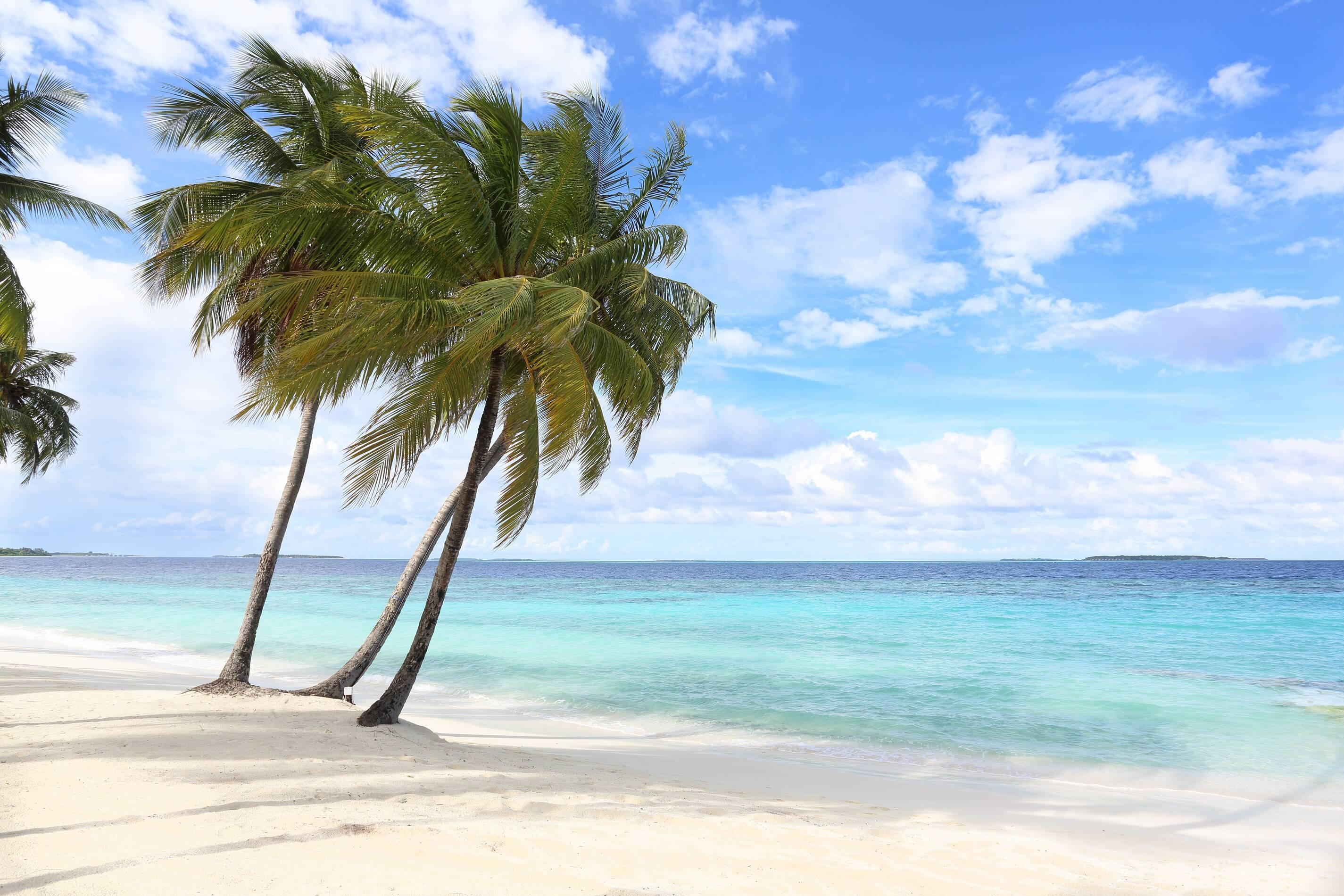 Amilla Maldives Resort Cocotiers