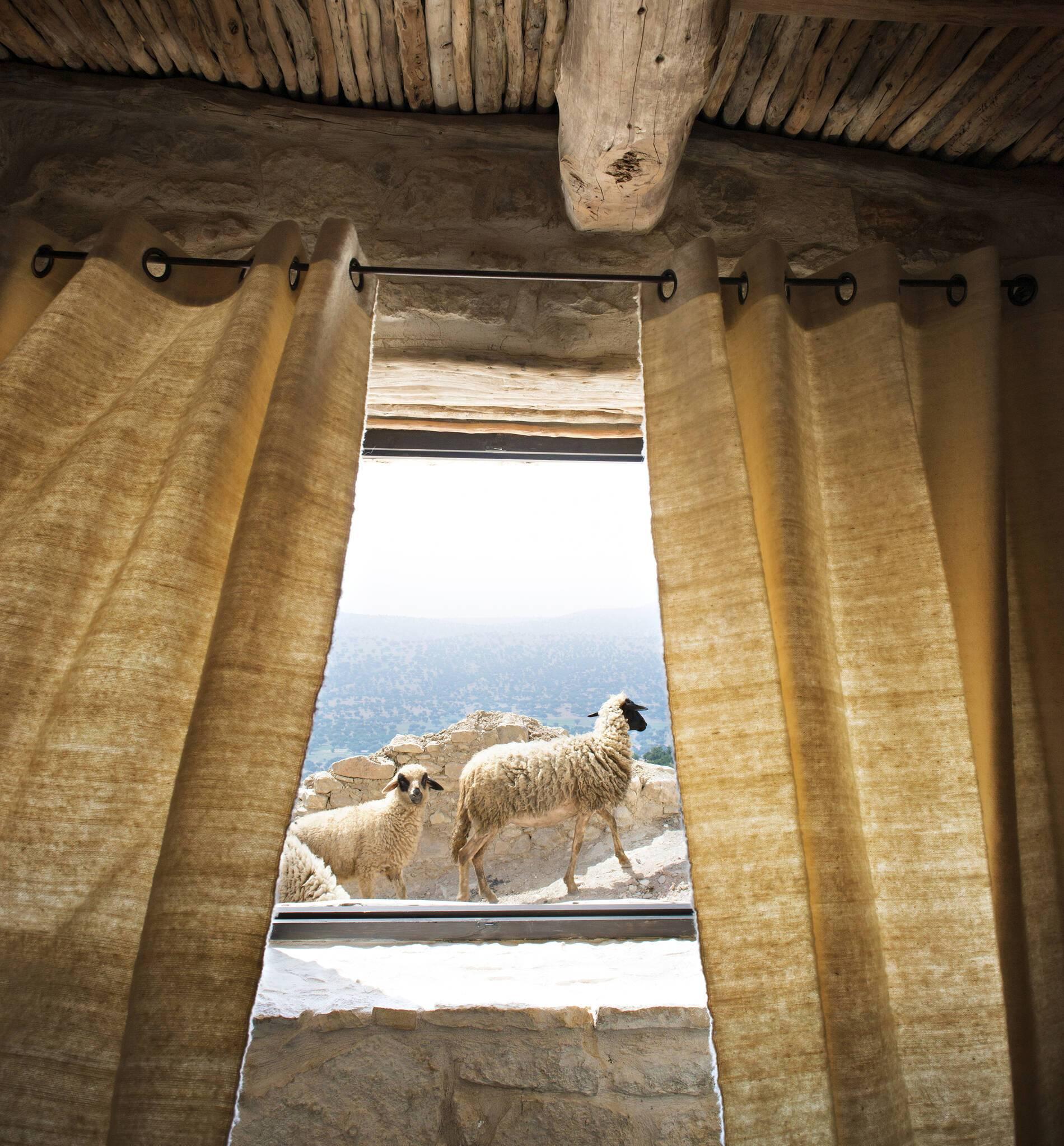 Maison Reves Arganiers Azrarag Sud Maroc Brebis