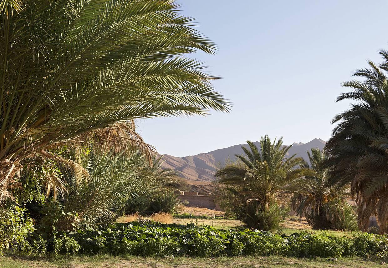 Maison Rouge Aoujou Sud Maroc Jardins