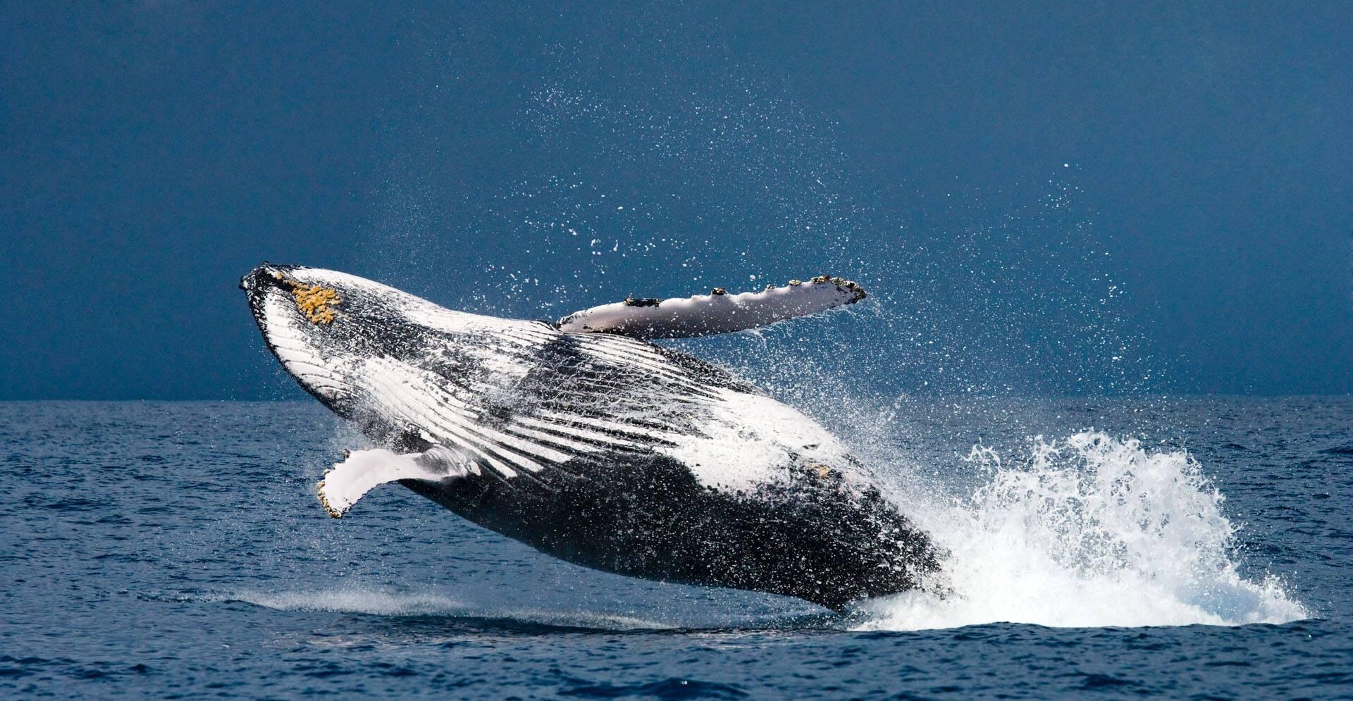 Tsara Komba Lodge Madagascar Baleine TK