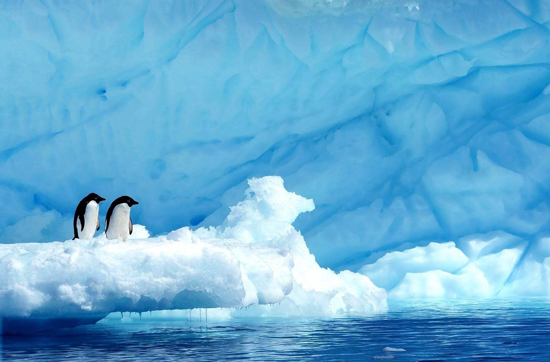 Ponant Croisiere Antarctique Paulet Island manchots Adelie
