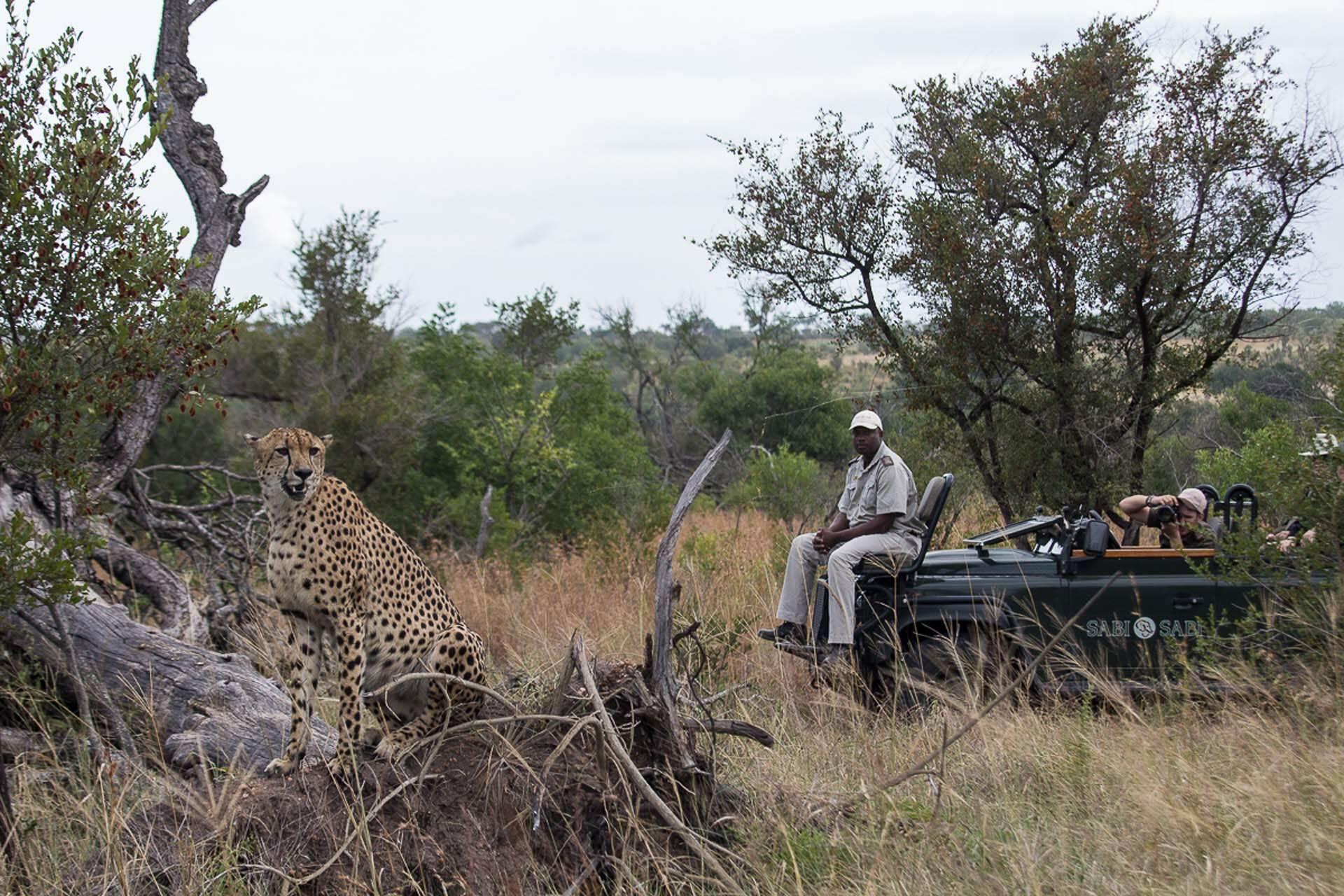 Sabi Sabi Bush Lodge Afrique du Sud Leopard