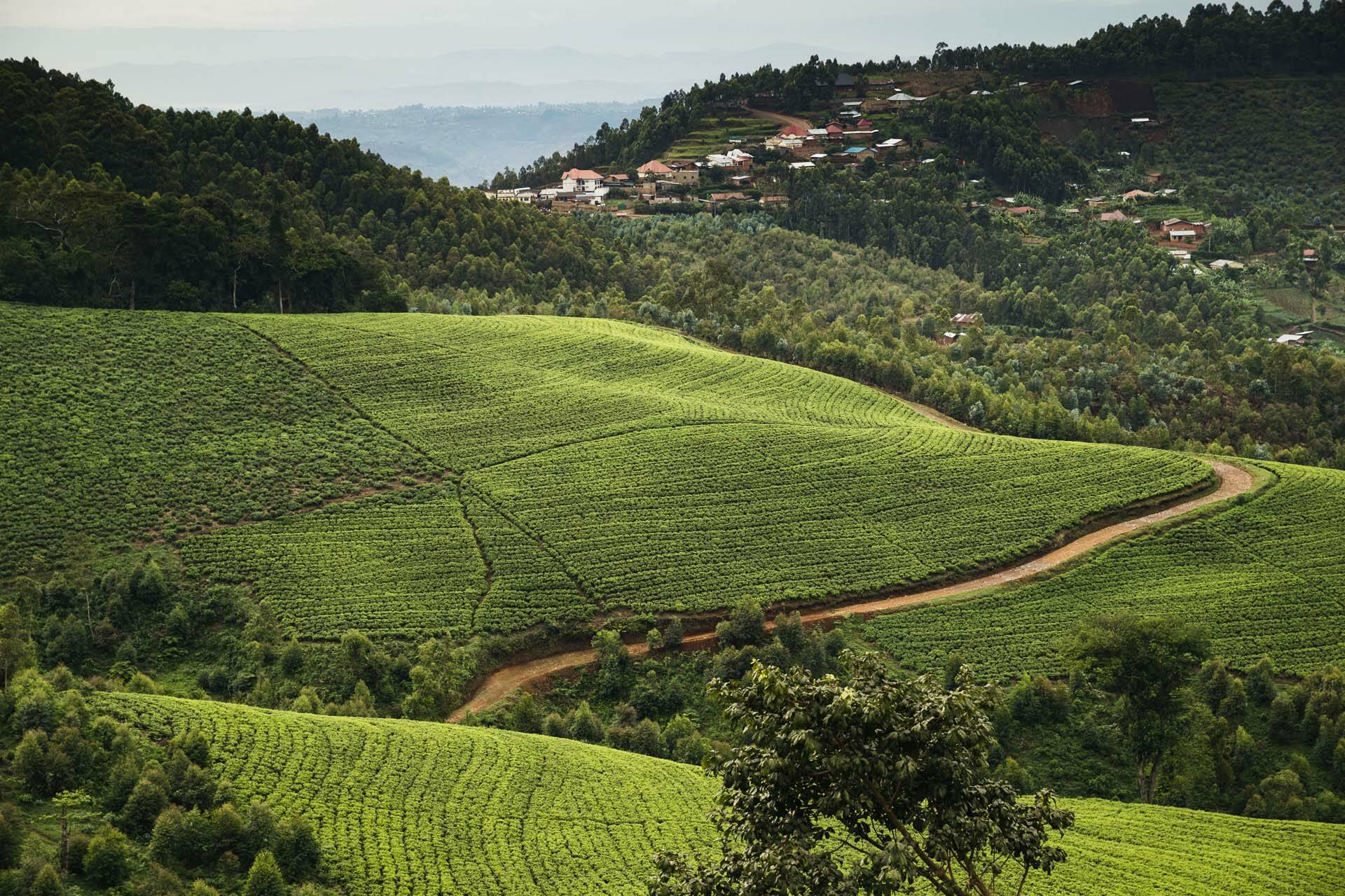Rwanda OneandOnly NyungweHouse Plantation The