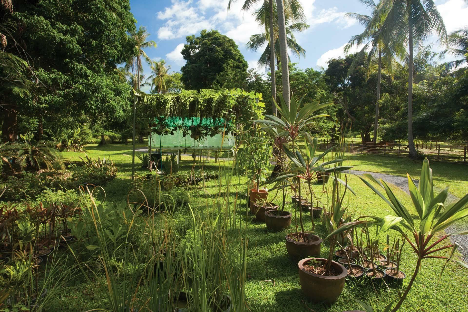 Thailande Koh Samui Napasai Jardins