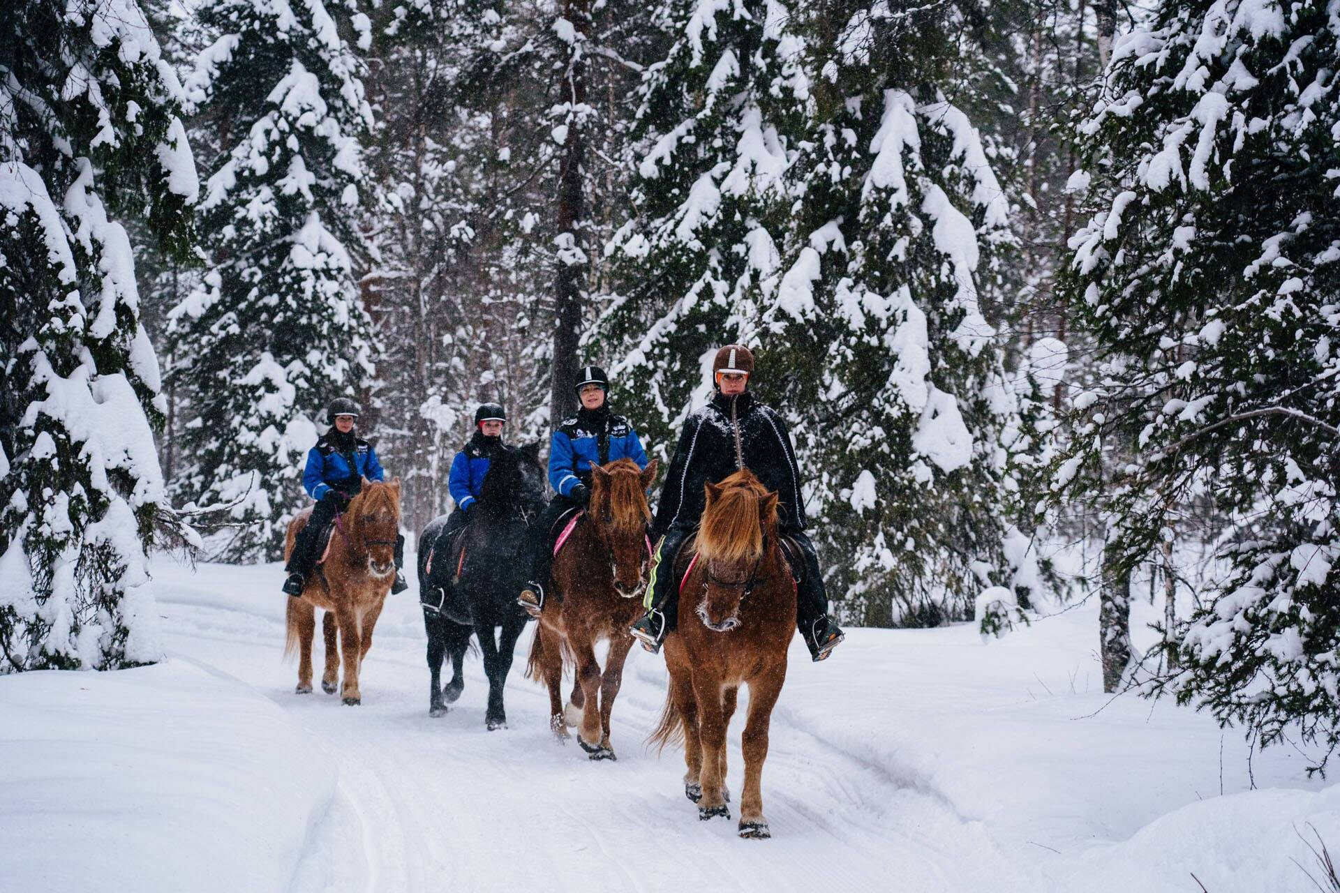 Apukka Resort Rovaniemi Finlande Balade Cheval
