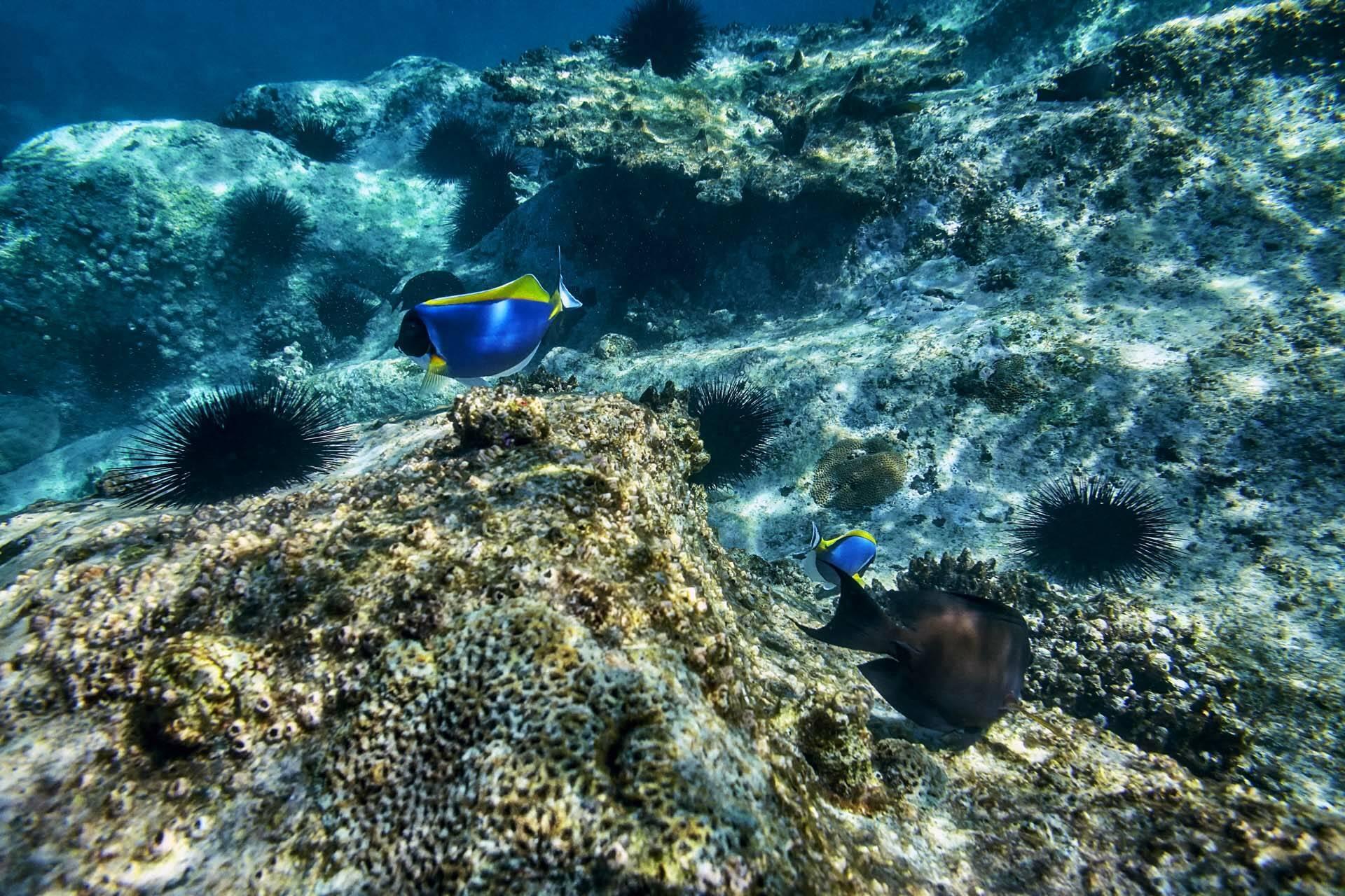 Seychelles Six Senses Zil Pasyon poissons