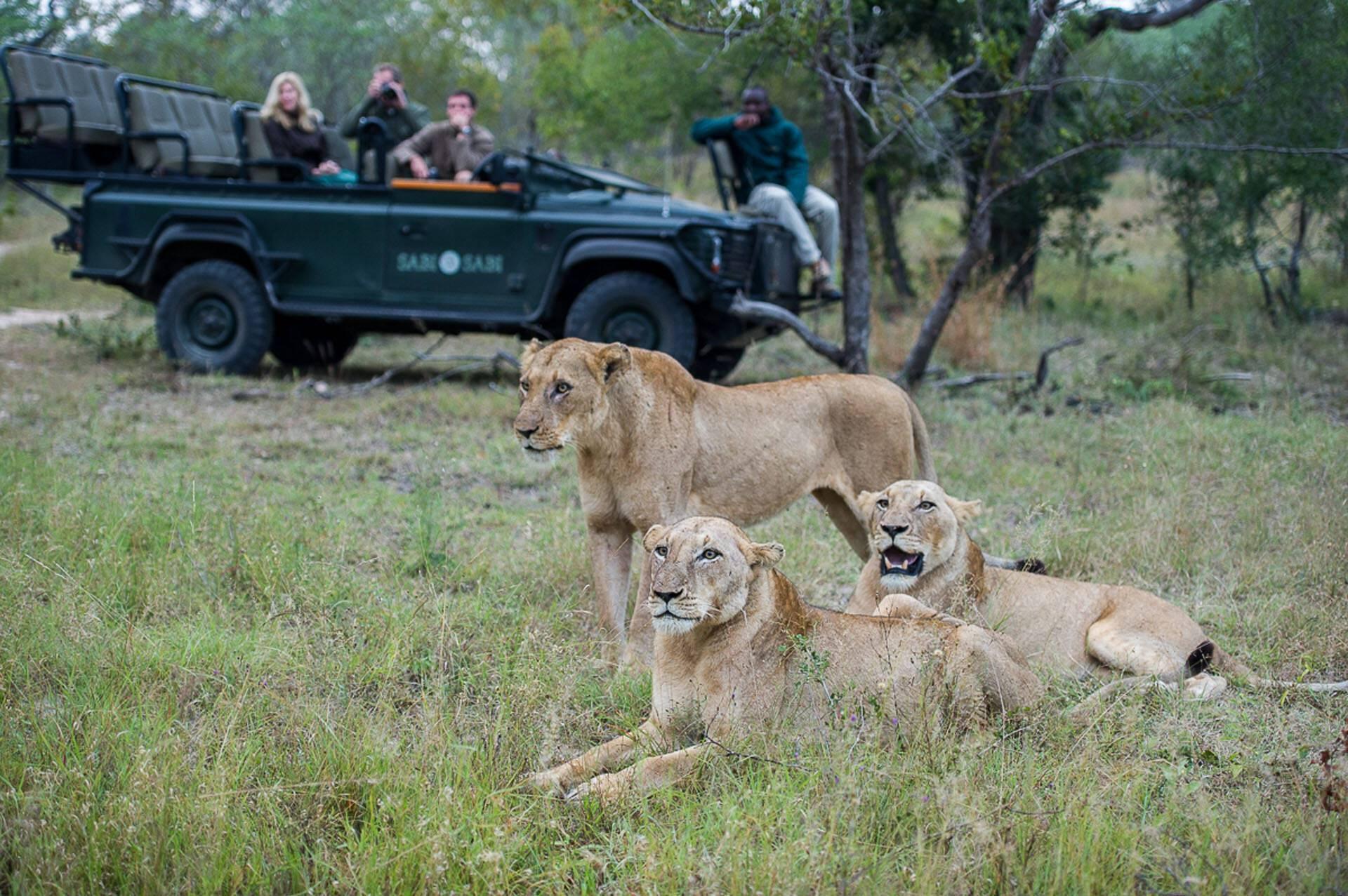 Sabi Sabi Bush Lodge Afrique du Sud Lionnes