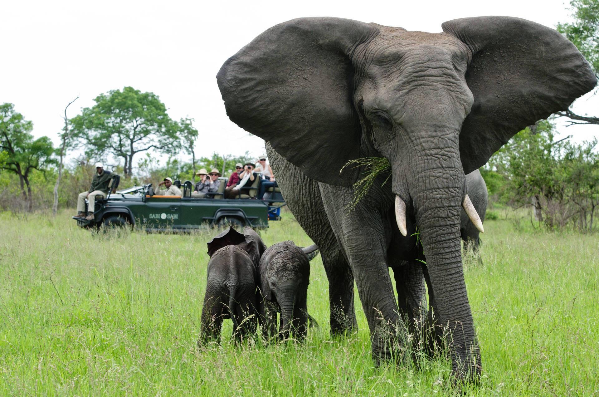 SafariSabi Sabi Bush Lodge Afrique du Sud Elephants