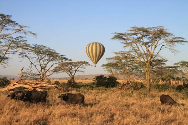 Safari : les 6 réserves emblématiques d' Afrique