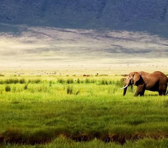 Safari Ngorongoro Crater delbars Fotolia