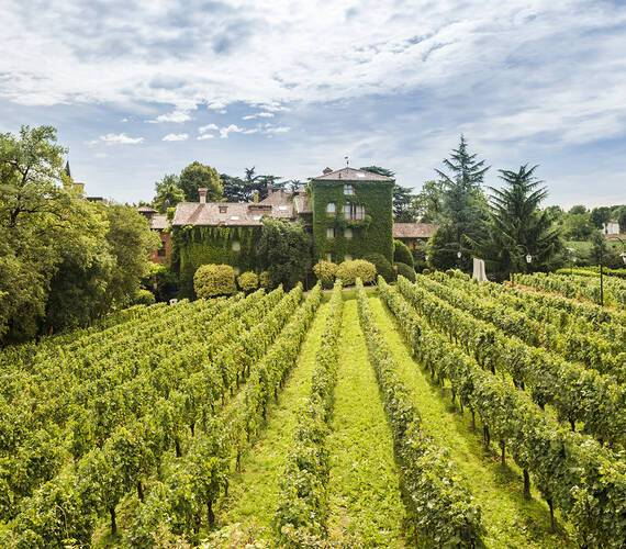 Albereta Italie Vignes
