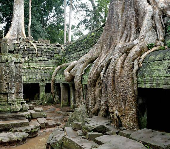 Circuit Cambodge Angkor Ta Phrom