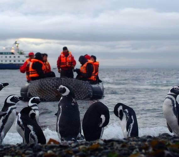 Circuit Chili Croisiere Australis Patagonie Excursion Pingouins